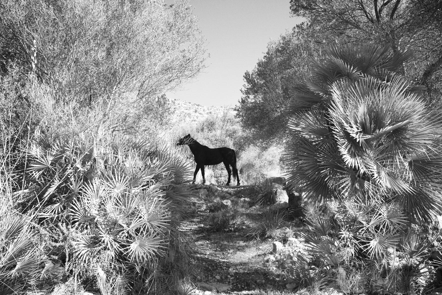 Park Hyatt Mallorca – Landscapes AB : HENNY FRAZER